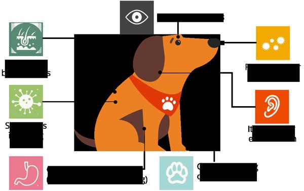 CS2_dog-(resized