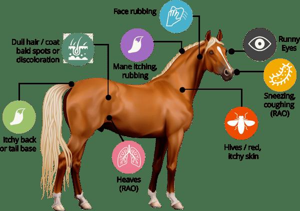 Horse Symptoms