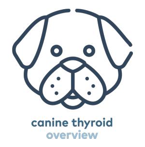 canine-thyroid