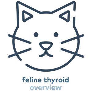 feline-thyroid